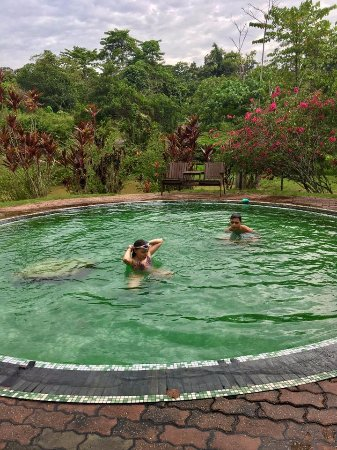 Sepilok, Malezja: Its shallow and small but fine for cooling off and relaxing