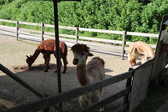 Yamakoshitanesuhara Alpaca Ranch