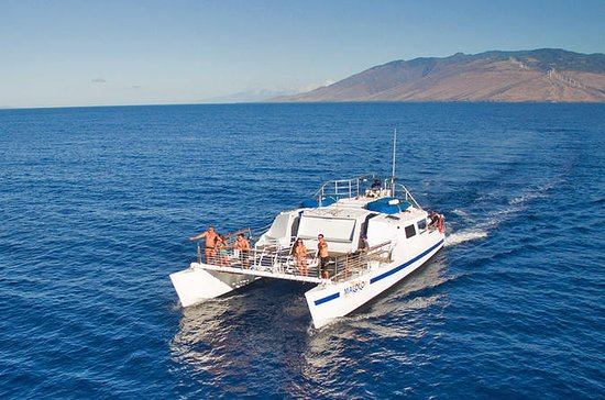 Maui Snorkeling Tour to Coral Gardens...