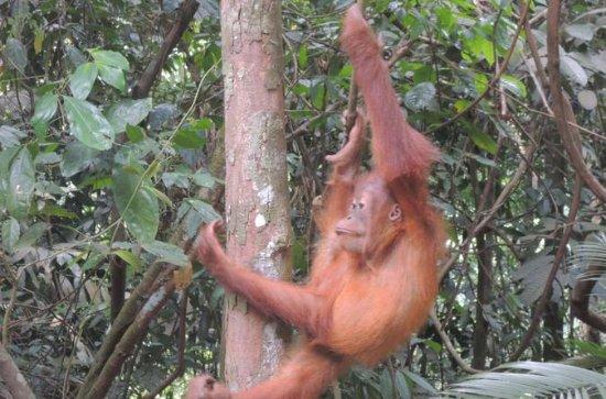 3 days Medan Orangutan Bukit Lawang