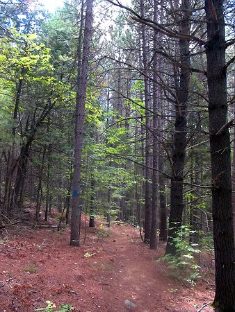Lanark, Kanada: The conifer (pine) forest part of the trail