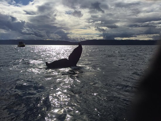 Wild Whales Vancouver