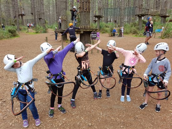 Tree Adventures: Our little dabbing climbers!!!