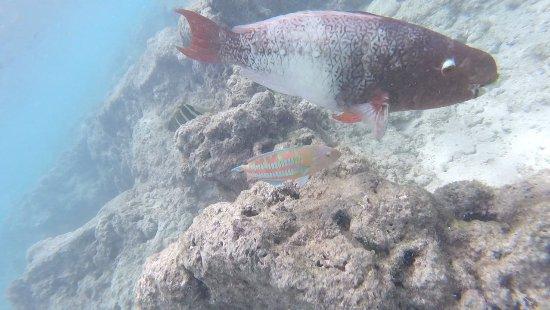 Hanauma Bay Nature Preserve: 20171020_181723_large.jpg