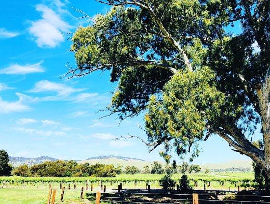 Rowland Flat, Australia: photo3.jpg