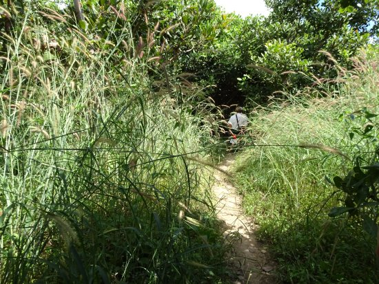 Phnom Kulen National Park: 木々が顔や手足にバシバシ当たります。