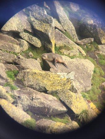 Westport, Nueva Zelanda: Toller Platz um Robben zu beobachten. Wer die Tiere etwas genauer sehen möchte, sollte sein Fern