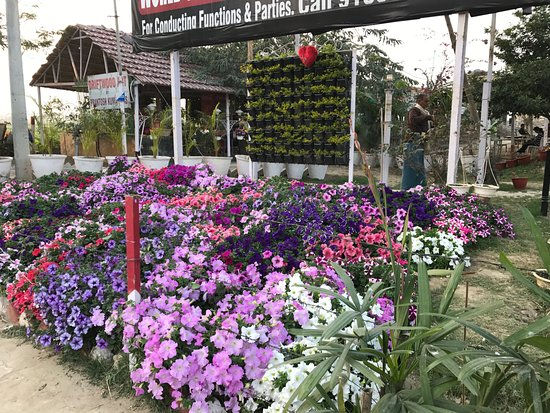 Bhagalpur, Indie: Flower Decoration