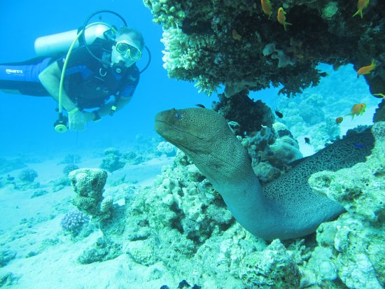 Diving Ocean Makadi Bay: Motay eal on the Housereef