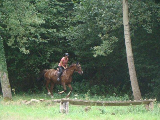 Ecole d'Equitation Ledermann: Belle détente en forêt