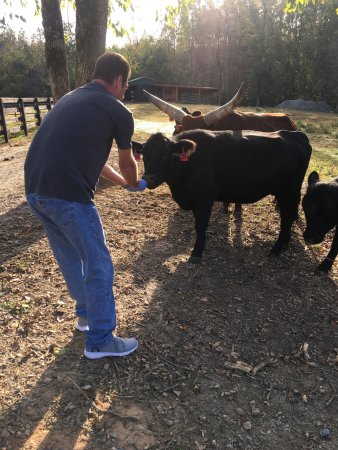 Dahlonega, GA: Amazing experience feeding the animals