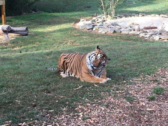 Dahlonega, GA: Amazing experience feeding the animals