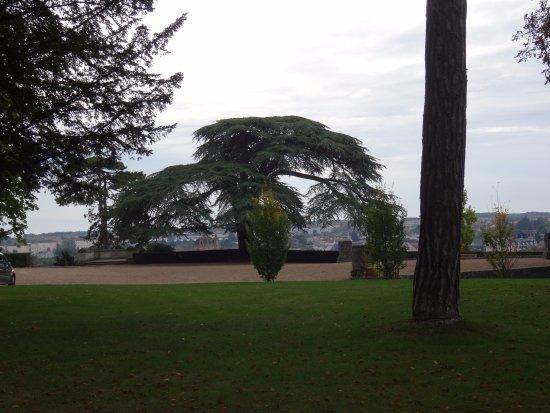 Chapelle royale Saint-Louis : Cèdre dans le parc dominant la ville