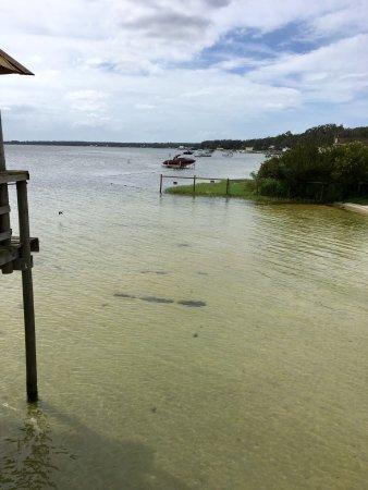 Ocklawaha, FL: photo2.jpg