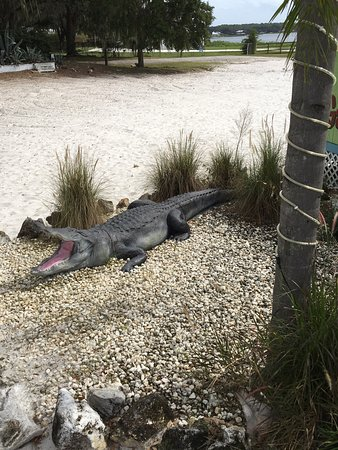Ocklawaha, FL: photo5.jpg
