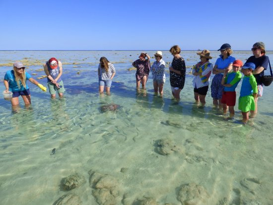 Lady Elliot Island, Australia: Paseo por el arrecife