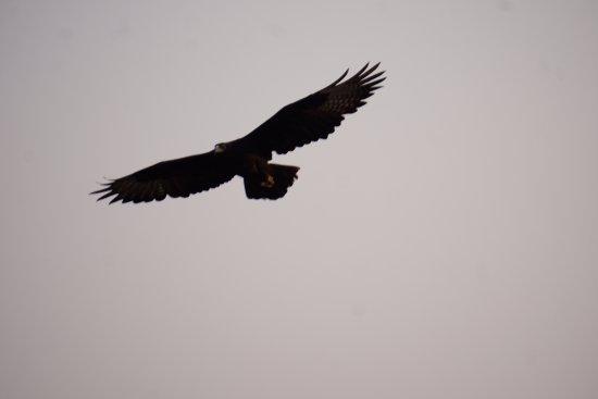 Gorges and Little Gorges Lodge: Ein Adler aus der Schlucht