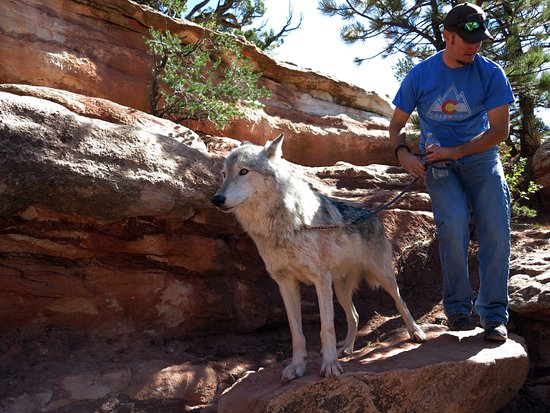 Manitou Springs, CO: On eof the Wolves