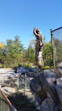 North Adams, MA: Nature's wood carving