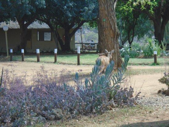 Balule Nature Reserve Imagem