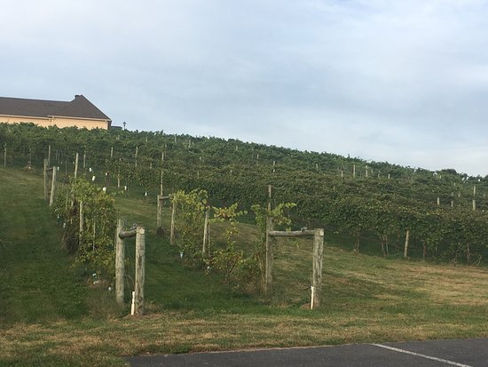 Bluestone Vineyard: photo1.jpg