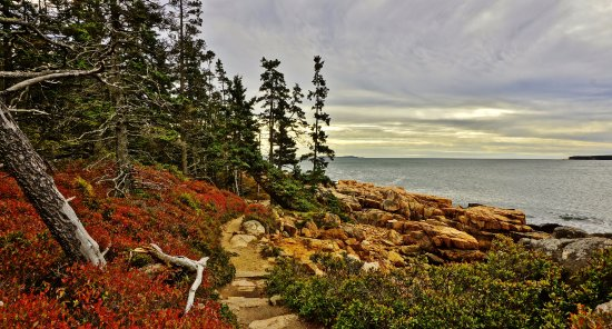 Bass Harbor, ME: Low bushes added color