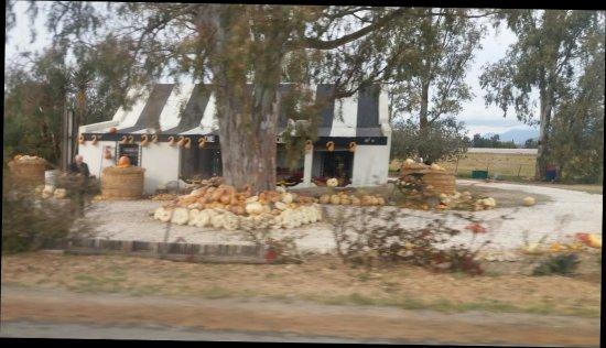 Worcester, Güney Afrika: Die Pampoen Padstalletjie