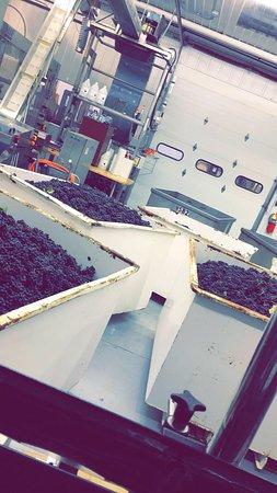 Chateau Grand Traverse Winery: photo2.jpg
