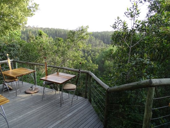 Tsala Treetop Lodge Photo