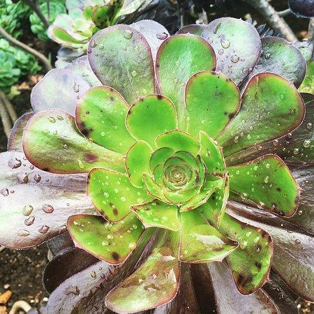 Stranraer, UK: Plants in the garden.