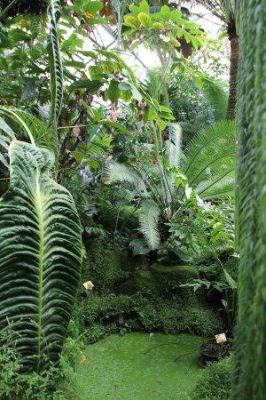 In Den Tropen Bild Von Botanischer Garten Der Universität