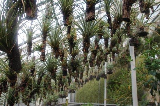 Pflanzen Mit Luftwurzeln Geht Es Hier Richtig Gut Bild Von