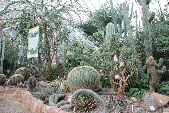 In Der Wüste Bild Von Botanischer Garten Der Universität