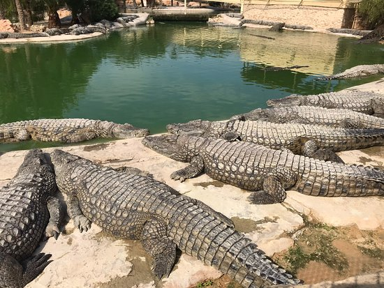 ‪The Crocodile Farm‬