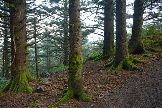 Kodiak, AK: rain forest in North End Park