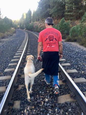 Graeagle, CA: My boys walking along railroad tracks we found while exploring the grounds.