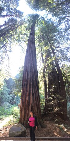 Muir Woods National Monument Mill Valley Ca Reviews Amp Top Tips Before You Go With Photos Tripadvisor