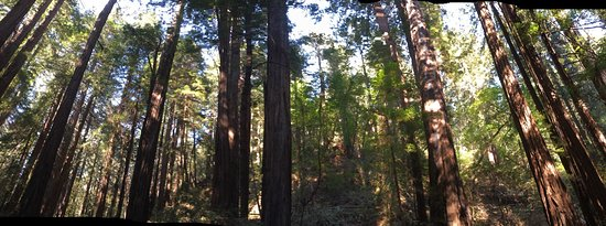 Muir Woods National Monument Mill Valley Ca Reviews