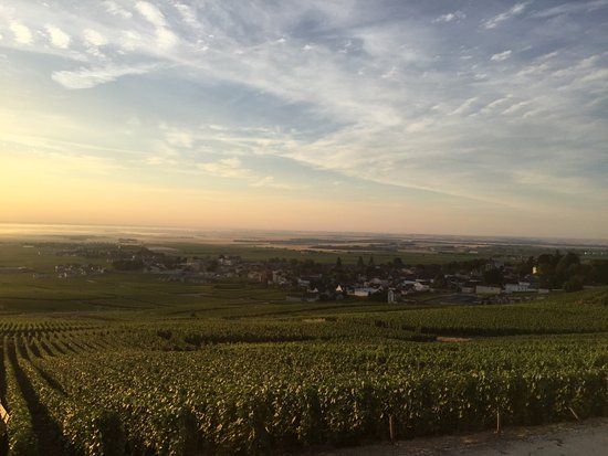 vue du vignoble en haut d'Avize