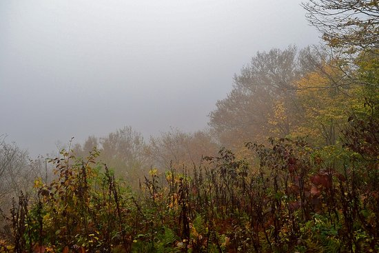 Todd, NC: Foggy View from Trail