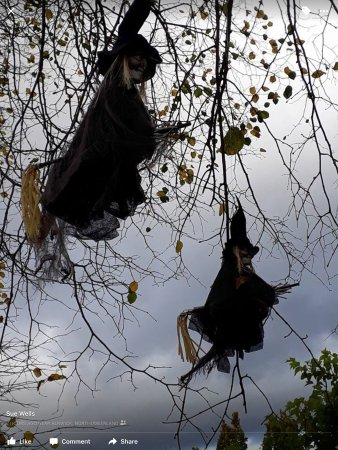 The Alnwick Garden: Witches in trees