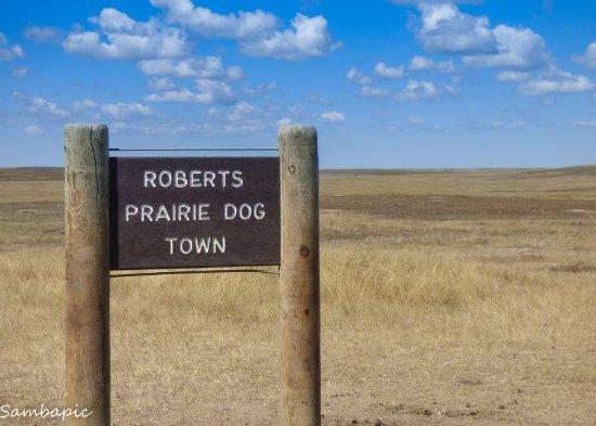 Roberts Prairie Dog Town Picture Of Roberts Prairie Dog Town
