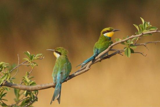 Hwange National Park, Zimbabwe: photo4.jpg