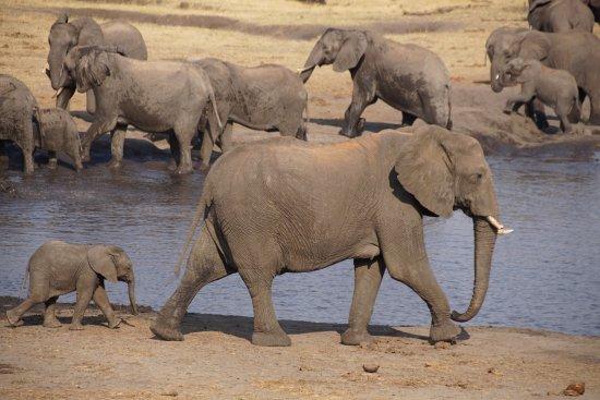 Hwange National Park, Zimbabwe: photo8.jpg