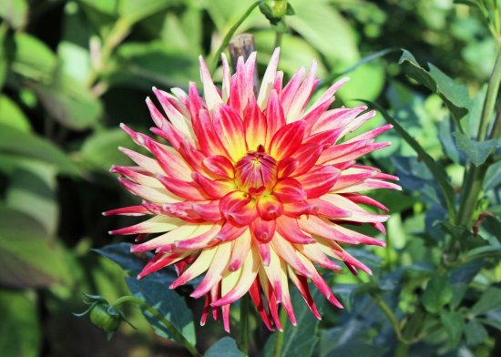 Cantigny Park: Flowers at the Park.