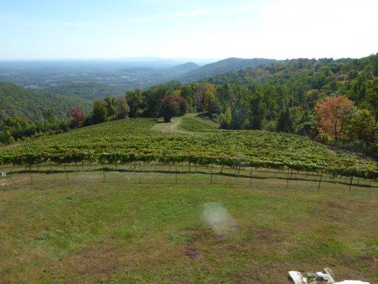 Dyke, Wirginia: Vines