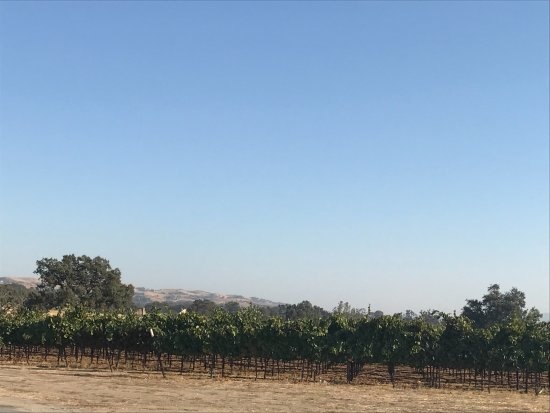 Wild Horse Winery & Vineyards: Vineyard