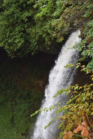 Silver Falls State Park: Waterfall where you can walk behind it.