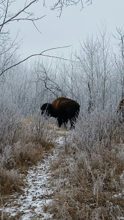 Elk Island National Park : Winter shot