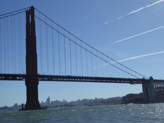SF Bay Whale Watching照片